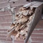 De termieten hebben niet veel overgelaten van de houtconstructie